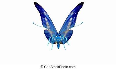 vlinder, tussenverdieping