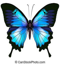 vlinder, vector, illustratie