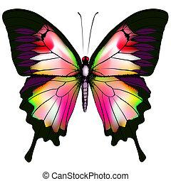 vlinder, vector, vrijstaand