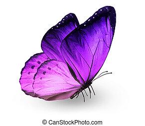vlinder, viooltje