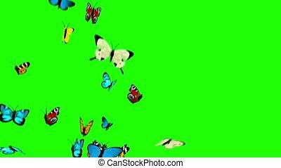 vlinder, vliegen, groene achtergrond