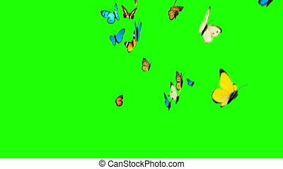 vlinder, vliegen, op, een, groene achtergrond