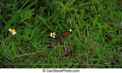 vlinder, vorst, bloem