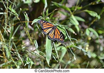 vlinder, vorst, open, vleugels