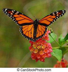 vlinder, vorst