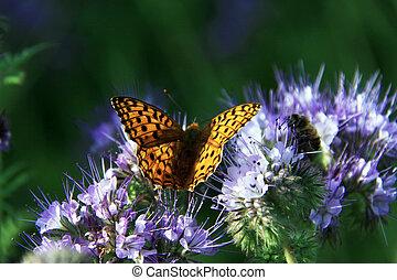 vlinder, -, vorst