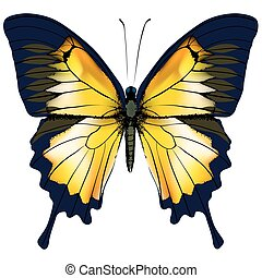 vlinder, vrijstaand, gele, illustratie, achtergrond, witte , butterfly.