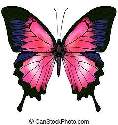 vlinder, vrijstaand, illustratie, achtergrond., vector, wit rood, butterfly.