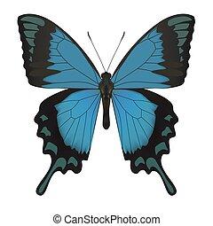 vlinder, vrijstaand, white.