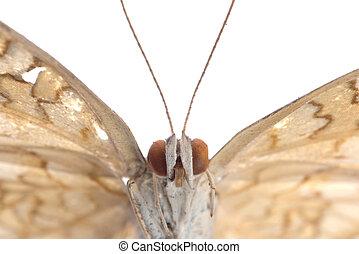 vlinder, vrijstaand, witte