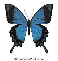 vlinder, white., vrijstaand