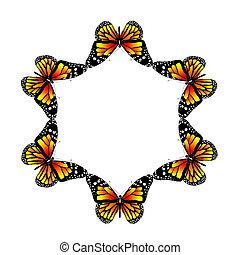 vlinder, witte achtergrond
