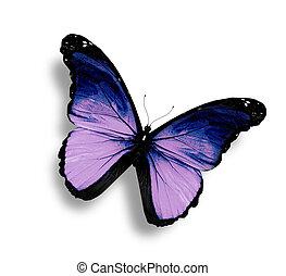 vlinder, witte , grunge, vrijstaand, viooltje