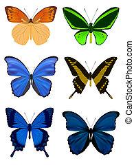 vlinder, witte , set, vrijstaand