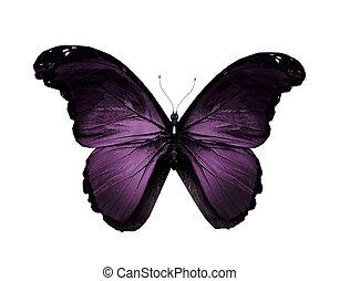 vlinder, witte , vliegen, vrijstaand, viooltje