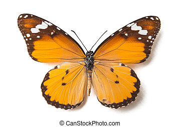 vlinder, witte , vrijstaand