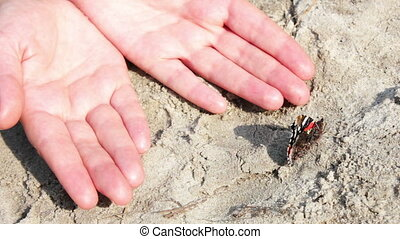 vlinder, zand, zwart rood