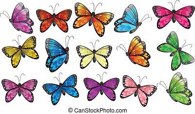 vlinders, bunter