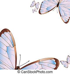 vlinders, mehrere