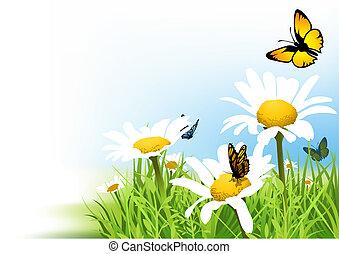 vlinders, und, gänseblumen