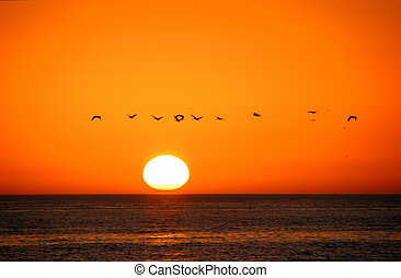 vlucht, eiland, florida, vogels, zonopkomst, sanibel