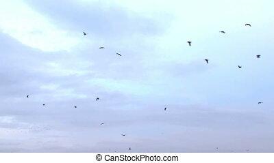 vlucht, van, een, kom van vogels bijeen