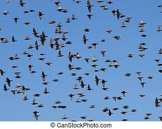 vlucht, vogels