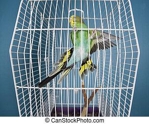 voando, animal estimação, pássaro