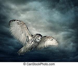 voando, coruja, pássaro