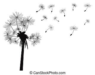 voando, fundo, dandelion