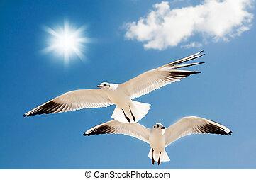 voando, gaivotas, dois