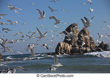 voando, gaivotas