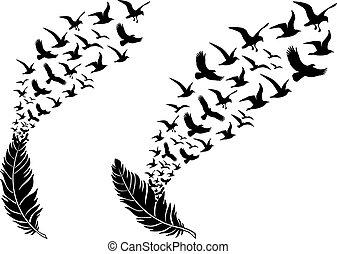 voando, pássaros, vetorial, penas