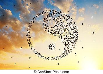 voando, sky., yang yin, formação, pôr do sol, pássaros