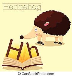 vocab, h, illustrator, ouriço