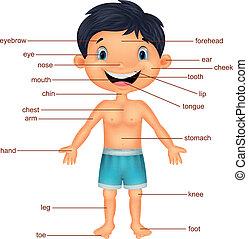 vocabulaire, dessin animé, partie, corps