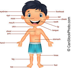 vocabulario, caricatura, parte, cuerpo