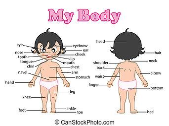 vocabulario, parte de, cuerpo