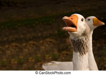 Vocal Goose - a goose with its mouth open as if to speak