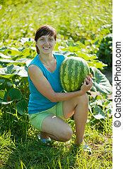 vodní meloun, manželka, vybírání