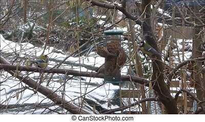 voedende vogels