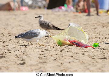 voedingsmiddelen, kust, gulls, zak, strand, dragged