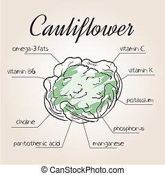 voedingsmiddelen, vector, lijst, illustratie, bloemkool