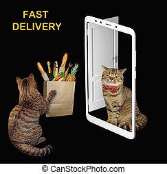 voedingsmiddelen, zak, bezorgt, kat