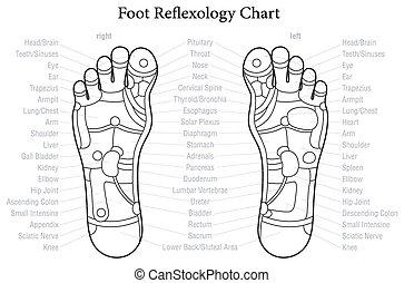 voet, tabel, reflexology, beschrijving