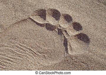 voetafdruk, zand, tenen