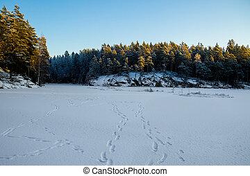 voetafdrukken, op, meer, ijs