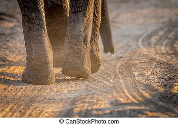 voetjes, afsluiten, kruger., op, elefant