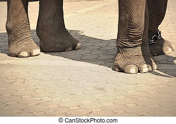 voetjes, dichtbegroeid boven, elefant