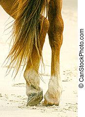 voetjes, het rusten, paarde, benen, positie